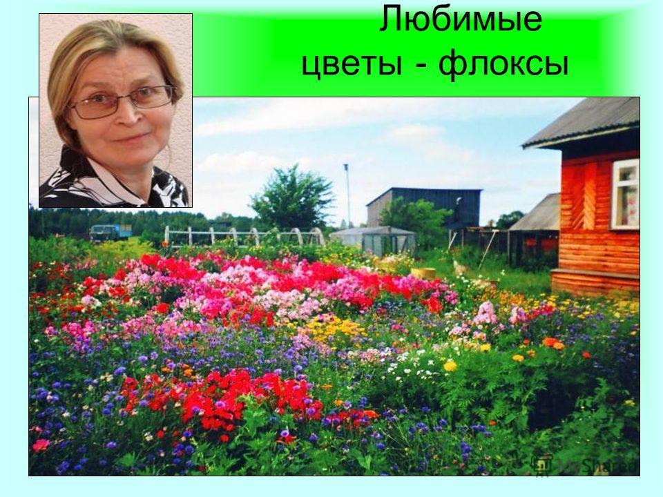 15 Любимые цветы - флоксы