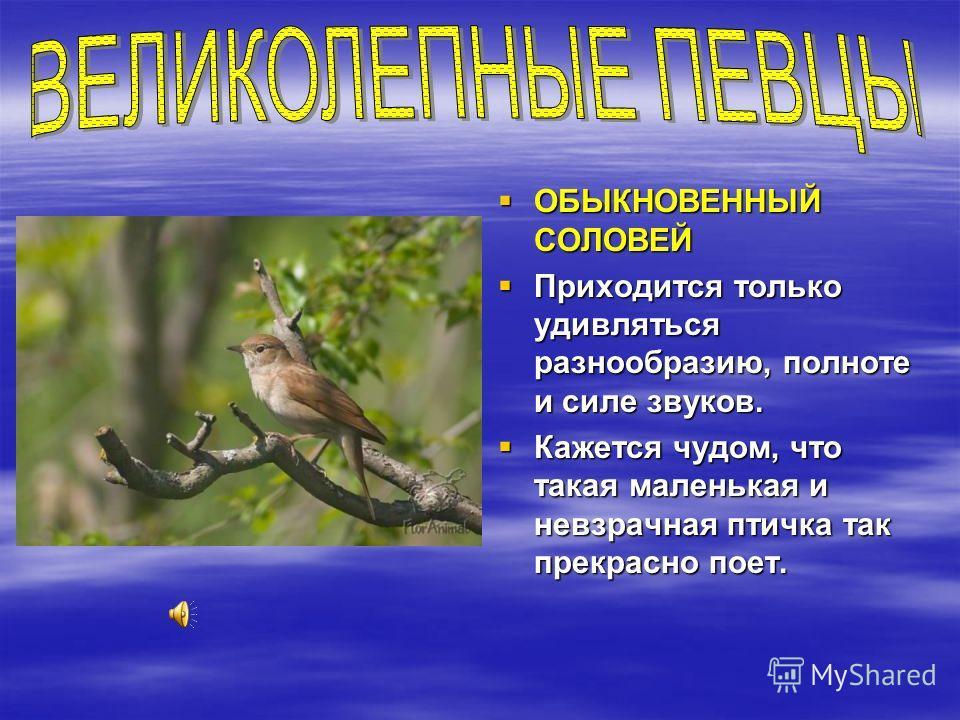 ОБЫКНОВЕННЫЙ СОЛОВЕЙ ОБЫКНОВЕННЫЙ СОЛОВЕЙ Приходится только удивляться разнообразию, полноте и силе звуков. Приходится только удивляться разнообразию, полноте и силе звуков. Кажется чудом, что такая маленькая и невзрачная птичка так прекрасно поет. К