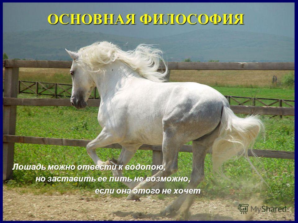 Лошадь можно отвести к водопою, но заставить ее пить не возможно, но заставить ее пить не возможно, если она этого не хочет если она этого не хочет ОСНОВНАЯ ФИЛОСОФИЯ