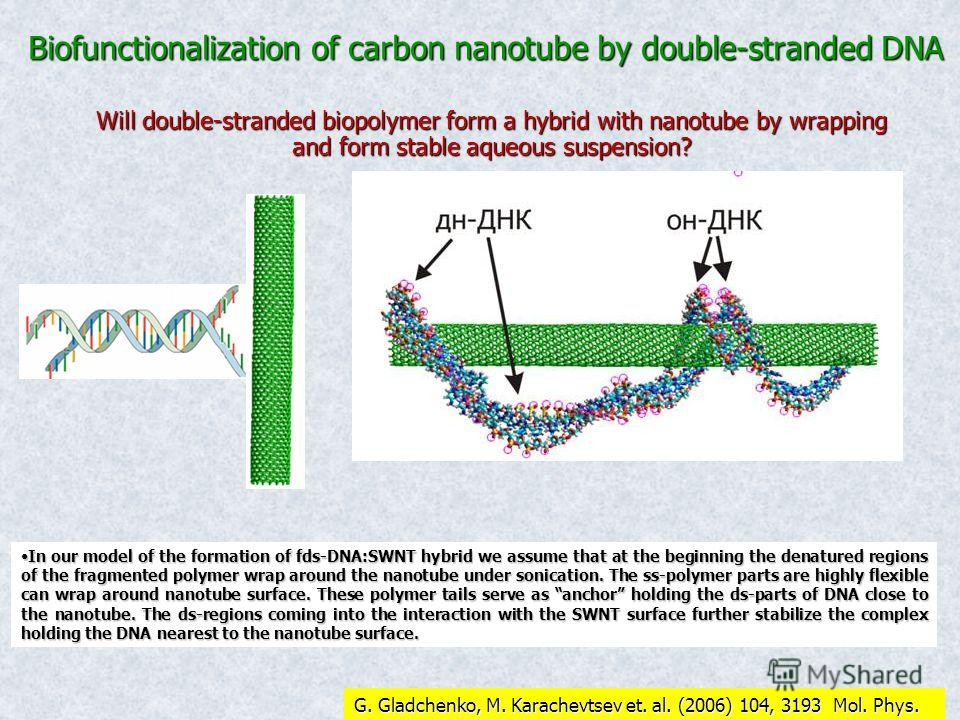 Biofunctionalization of carbon nanotube by double-stranded DNA Will double-stranded biopolymer form a hybrid with nanotube by wrapping and form stable aqueous suspension? In our model of the formation of fds-DNA:SWNT hybrid we assume that at the begi