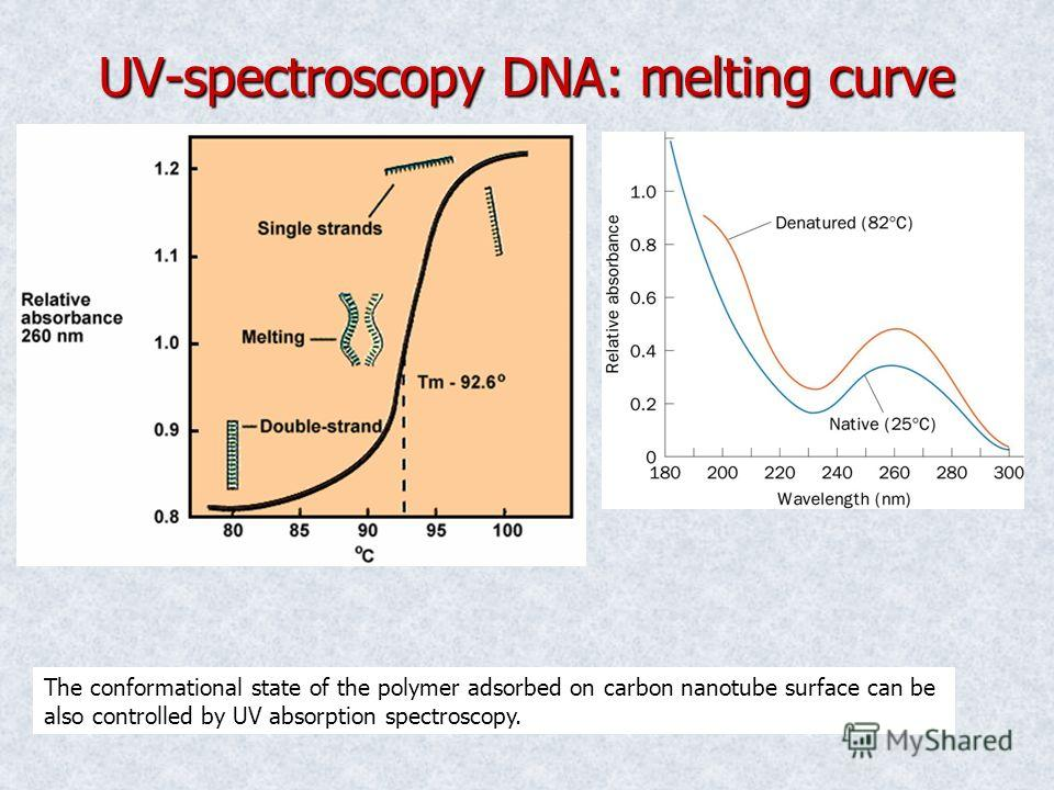 UV-spectroscopy DNA: melting curve The conformational state of the polymer adsorbed on carbon nanotube surface can be also controlled by UV absorption spectroscopy.