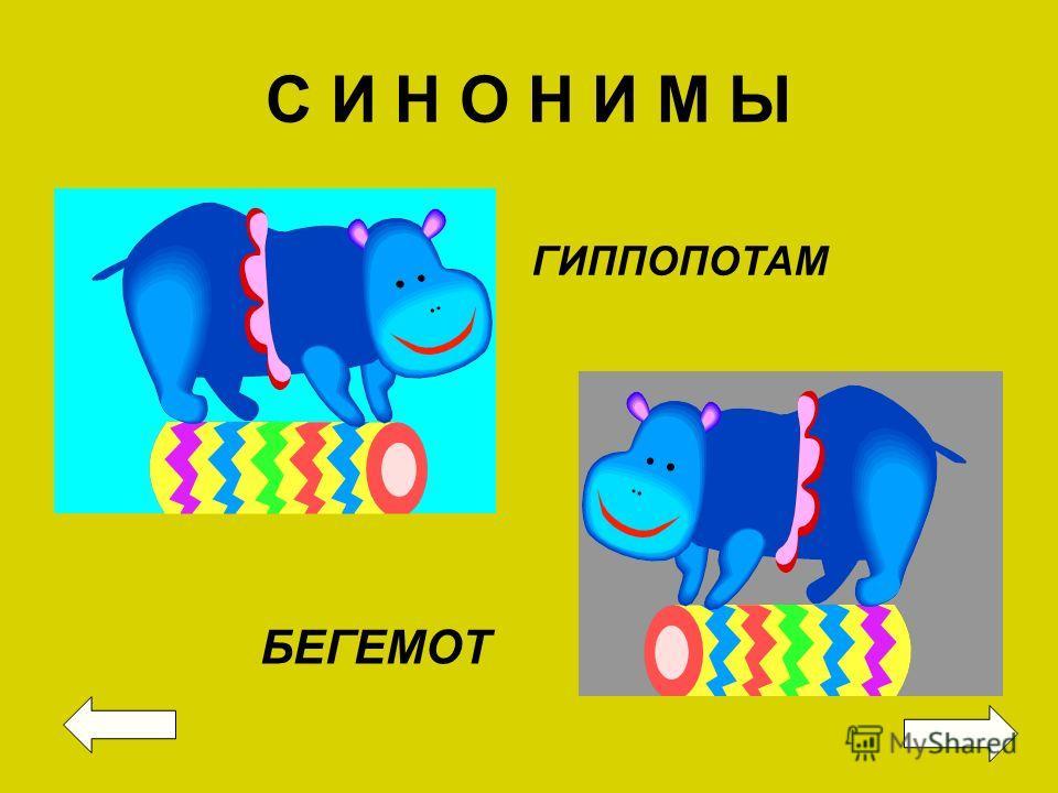 С И Н О Н И М Ы ГИППОПОТАМ БЕГЕМОТ