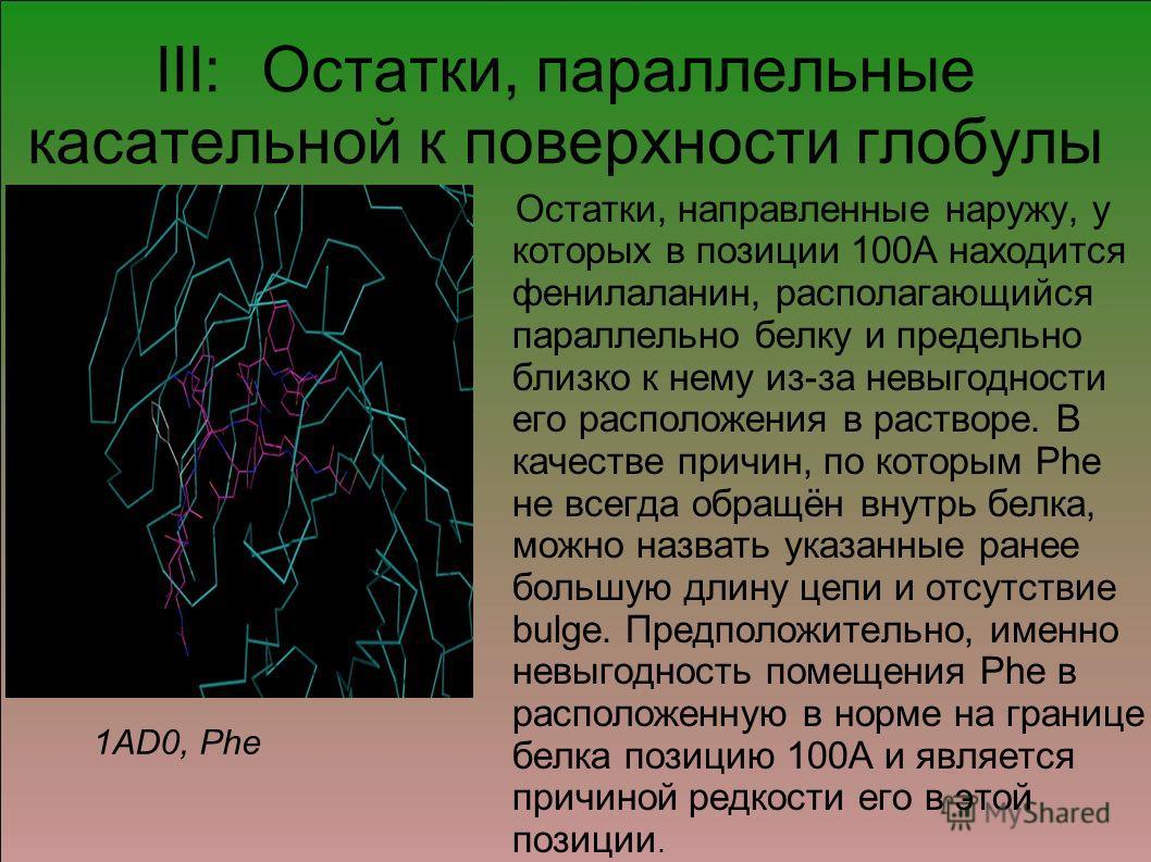 III: Остатки, параллельные касательной к поверхности глобулы Остатки, направленные наружу, у которых в позиции 100А находится фенилаланин, располагающийся параллельно белку и предельно близко к нему из-за невыгодности его расположения в растворе. В к