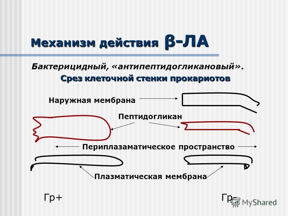 Механизм действия β-ЛА Бактерицидный, «антипептидогликановый». Срез клеточной стенки прокариотов Наружная мембрана Пептидогликан Периплазаматическое пространство Плазматическая мембрана Гр+Гр-