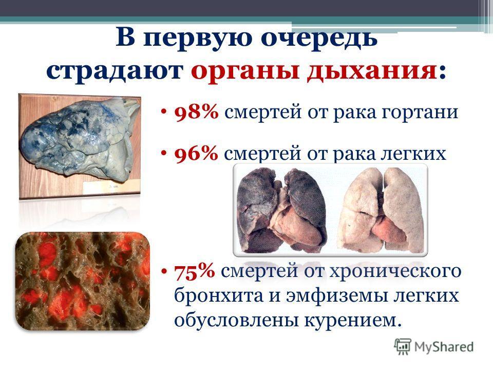 В первую очередь страдают органы дыхания: 98% смертей от рака гортани 96% смертей от рака легких 75% смертей от хронического бронхита и эмфиземы легких обусловлены курением.