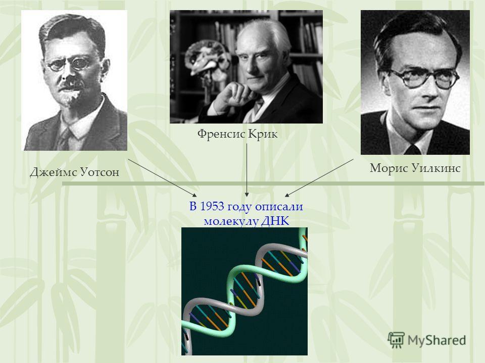 Джеймс Уотсон Френсис Крик Морис Уилкинс В 1953 году описали молекулу ДНК