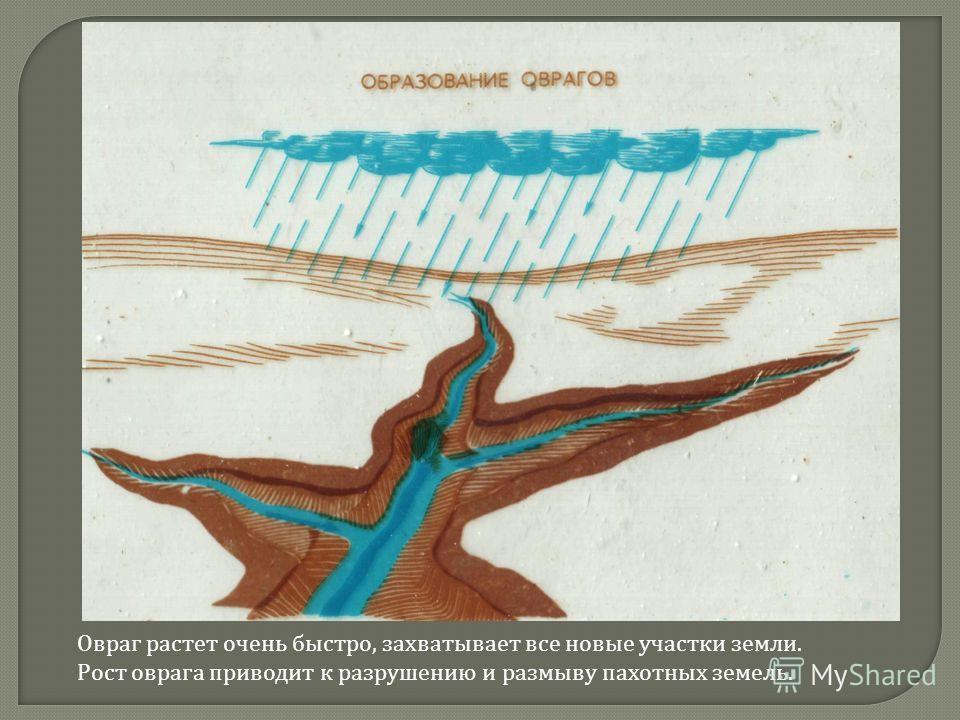Овраг растет очень быстро, захватывает все новые участки земли. Рост оврага приводит к разрушению и размыву пахотных земель.