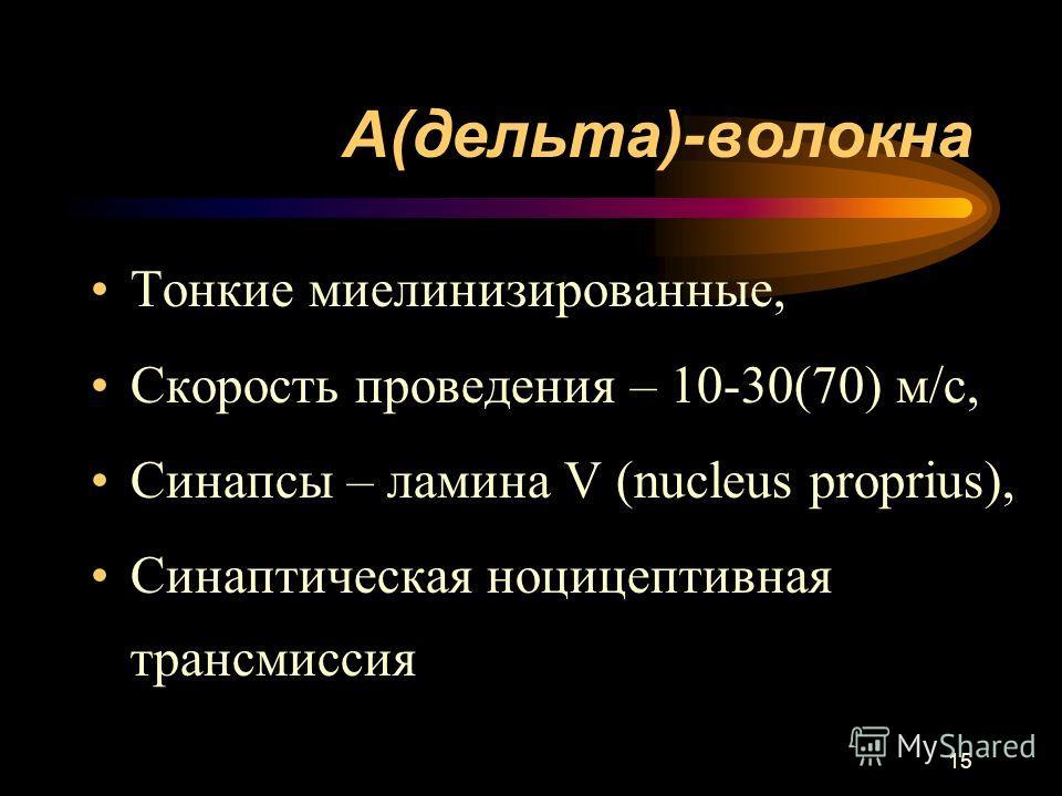 15 А(дельта)-волокна Тонкие миелинизированные, Скорость проведения – 10-30(70) м/с, Синапсы – ламина V (nucleus proprius), Синаптическая ноцицептивная трансмиссия