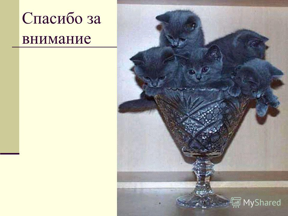 Мурманск, 200565 Спасибо за внимание