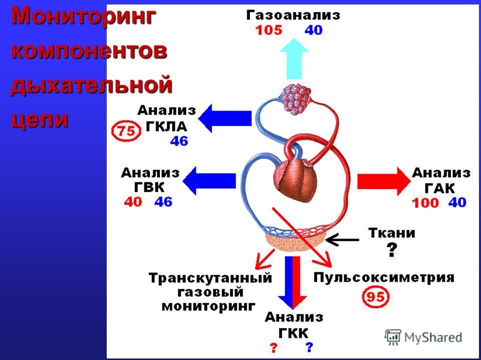 Мониторинг компонентов дыхательной цепи