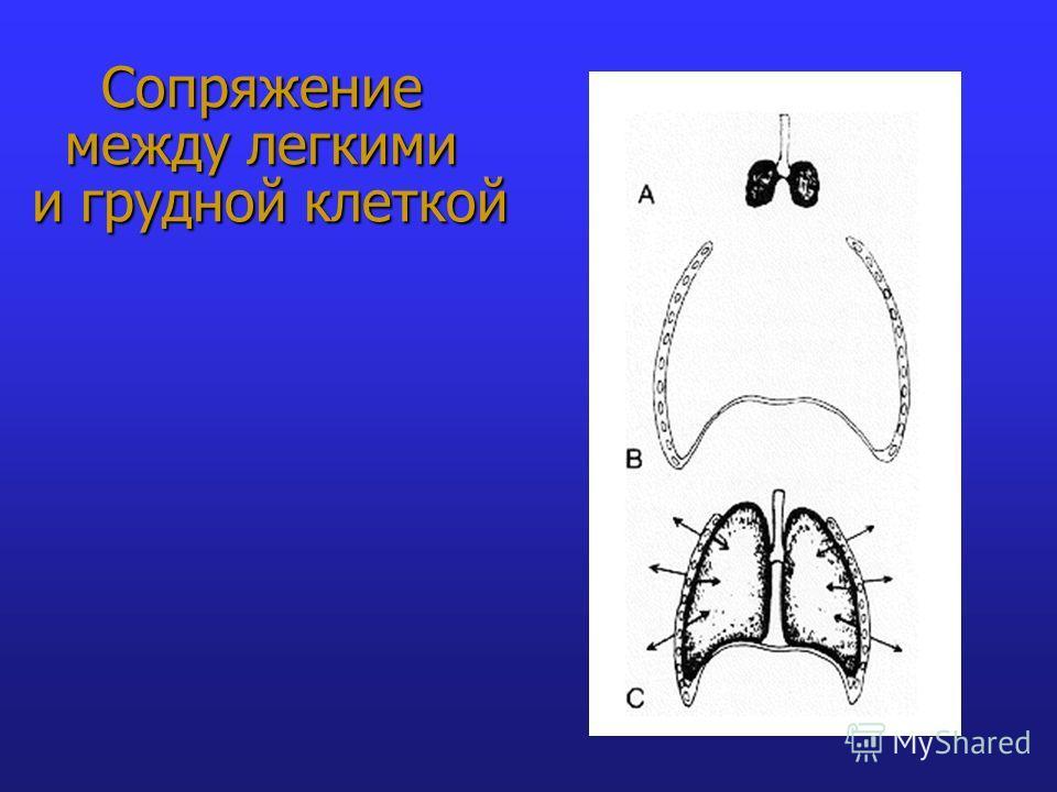 Сопряжение между легкими и грудной клеткой