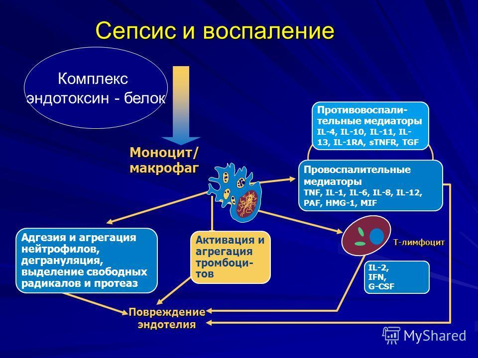 Сепсис и воспаление T-лимфоцит Повреждение эндотелия Активация и агрегация тромбоци- тов Адгезия и агрегация нейтрофилов, дегрануляция, выделение свободных радикалов и протеаз Противовоспали- тельные медиаторы IL-4, IL-10, IL-11, IL- 13, IL-1RA, sTNF