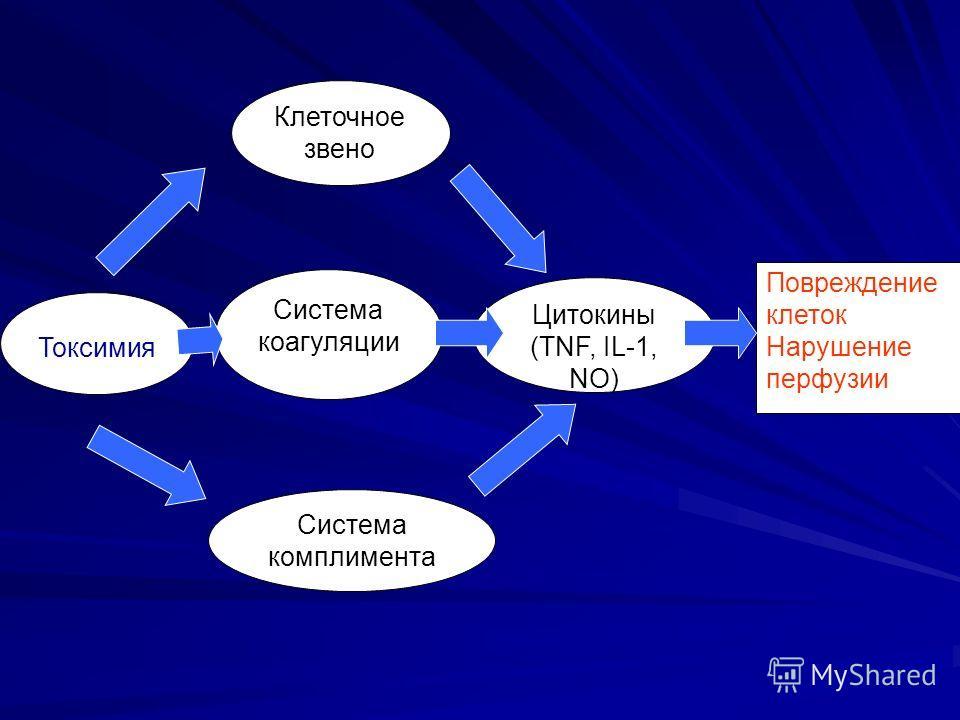 Токсимия Система комплимента Система коагуляции Клеточное звено Цитокины (TNF, IL-1, NO) Повреждение клеток Нарушение перфузии