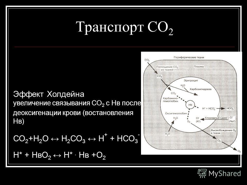 Транспорт СО 2 Эффект Холдейна увеличение связывания СО 2 с Нв после деоксигенации крови (востановления Нв) СО 2 +Н 2 О Н 2 СО 3 Н + + НСО 3 - Н* + НвО 2 Н*. Нв +О 2