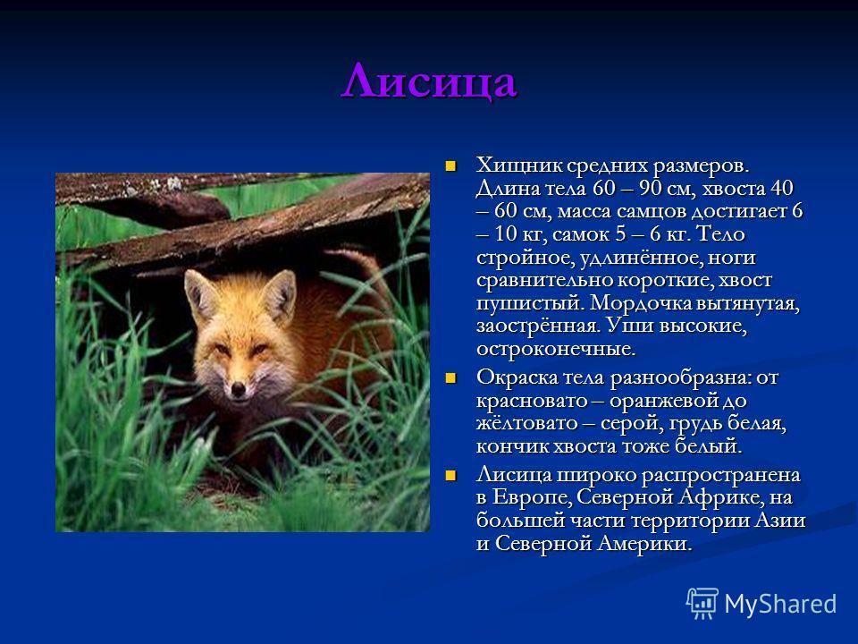 Лисица Хищник средних размеров. Длина тела 60 – 90 см, хвоста 40 – 60 см, масса самцов достигает 6 – 10 кг, самок 5 – 6 кг. Тело стройное, удлинённое, ноги сравнительно короткие, хвост пушистый. Мордочка вытянутая, заострённая. Уши высокие, остроконе