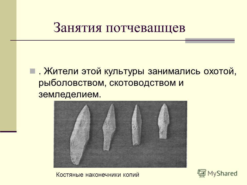 Занятия потчевашцев. Жители этой культуры занимались охотой, рыболовством, скотоводством и земледелием. Костяные наконечники копий