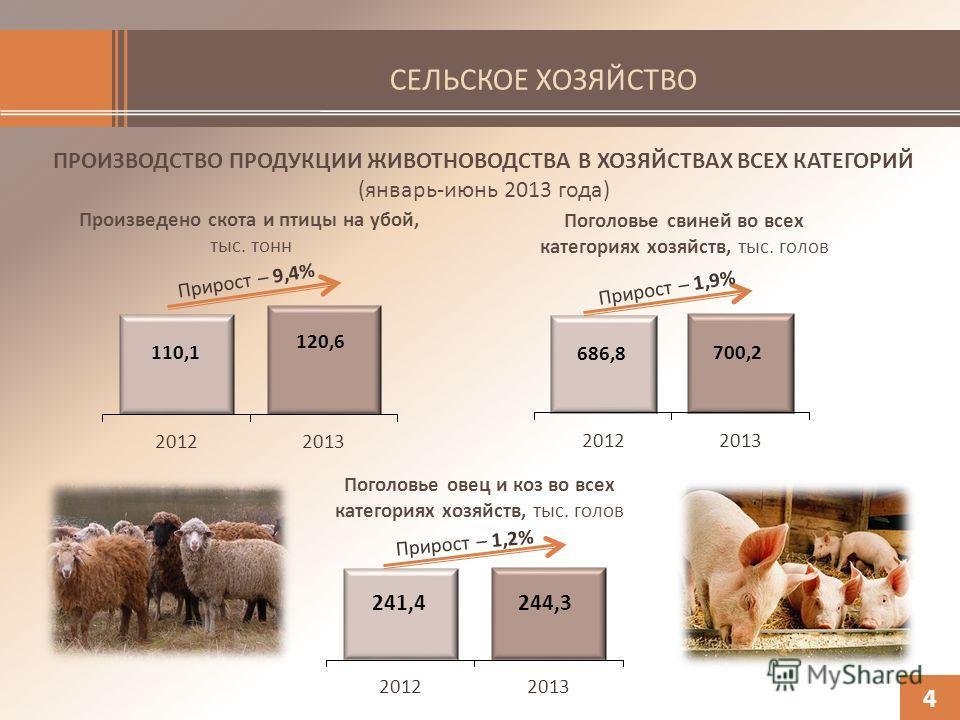 СЕЛЬСКОЕ ХОЗЯЙСТВО ПРОИЗВОДСТВО ПРОДУКЦИИ ЖИВОТНОВОДСТВА В ХОЗЯЙСТВАХ ВСЕХ КАТЕГОРИЙ (январь-июнь 2013 года) Произведено скота и птицы на убой, тыс. тонн 4 Поголовье свиней во всех категориях хозяйств, тыс. голов Поголовье овец и коз во всех категори