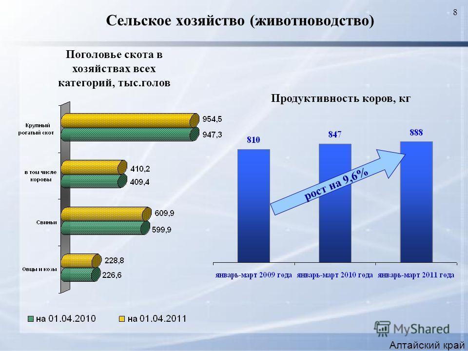 8 Сельское хозяйство (животноводство) Алтайский край Продуктивность коров, кг Поголовье скота в хозяйствах всех категорий, тыс.голов рост на 9,6%