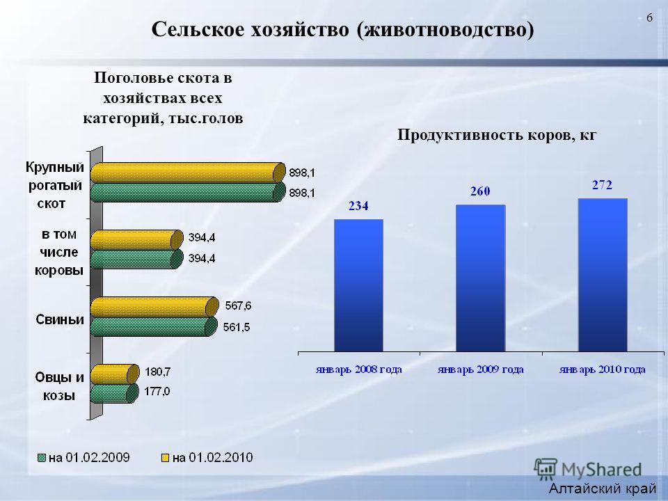 6 Сельское хозяйство (животноводство) Алтайский край Продуктивность коров, кг Поголовье скота в хозяйствах всех категорий, тыс.голов