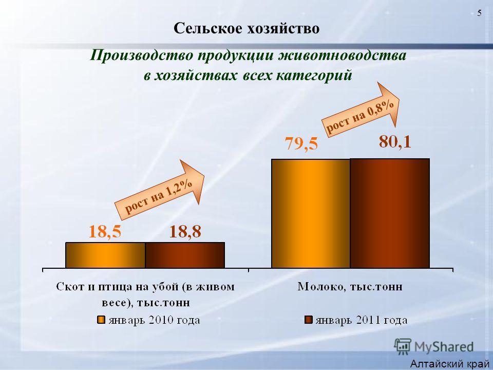 5 Сельское хозяйство Алтайский край Производство продукции животноводства в хозяйствах всех категорий рост на 1,2% рост на 0,8%