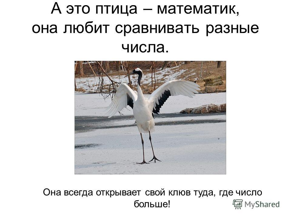 А это птица – математик, она любит сравнивать разные числа. Она всегда открывает свой клюв туда, где число больше!