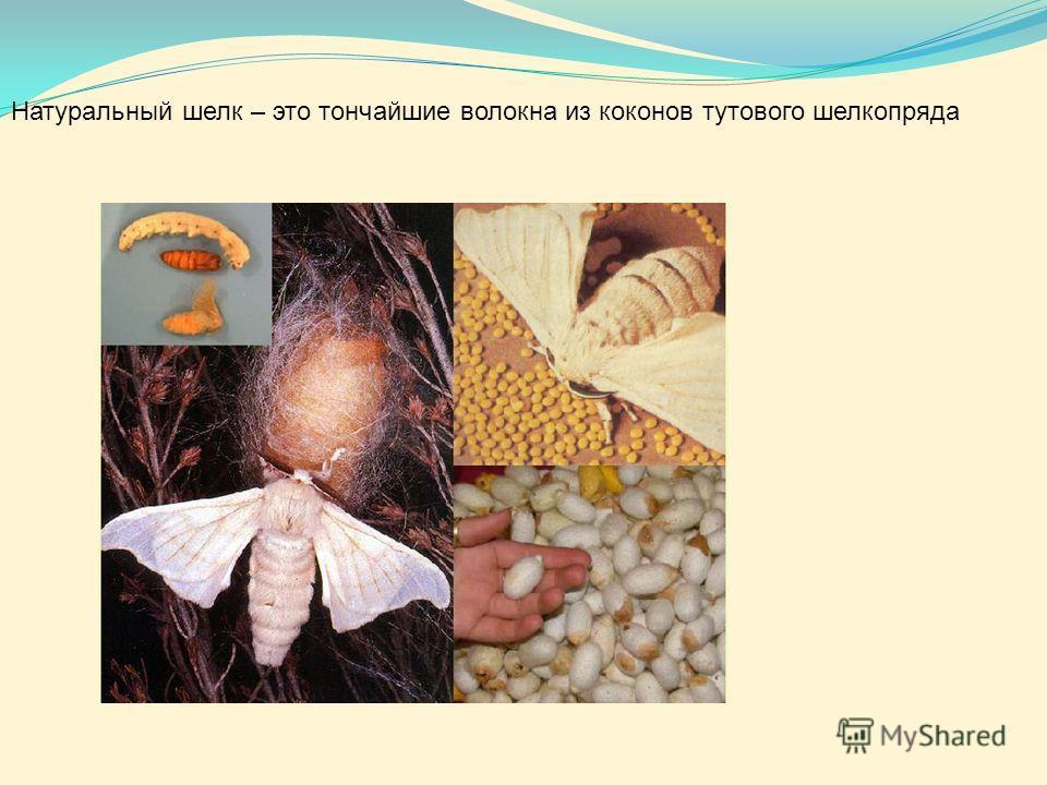 Натуральный шелк – это тончайшие волокна из коконов тутового шелкопряда