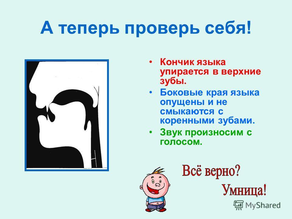 Посмотри на профиль звука [Л] и ответь на вопросы: Где находится язык, когда мы правильно произносим звук [Л]? Звук [Л] говорим с голосом или без голоса?