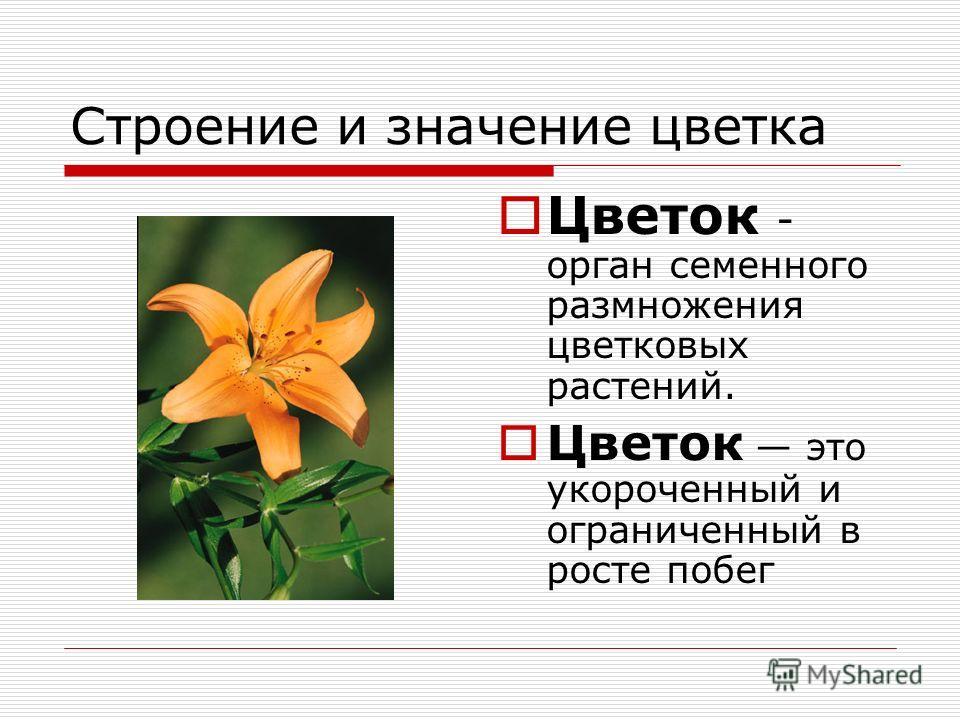Строение и значение цветка Цветок - орган семенного размножения цветковых растений. Цветок это укороченный и ограниченный в росте побег