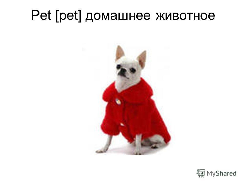Pet [pet] домашнее животное
