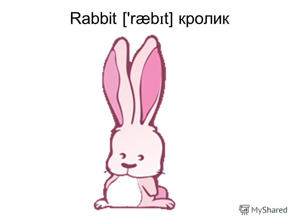 Rabbit ['ræb ɪ t] кролик