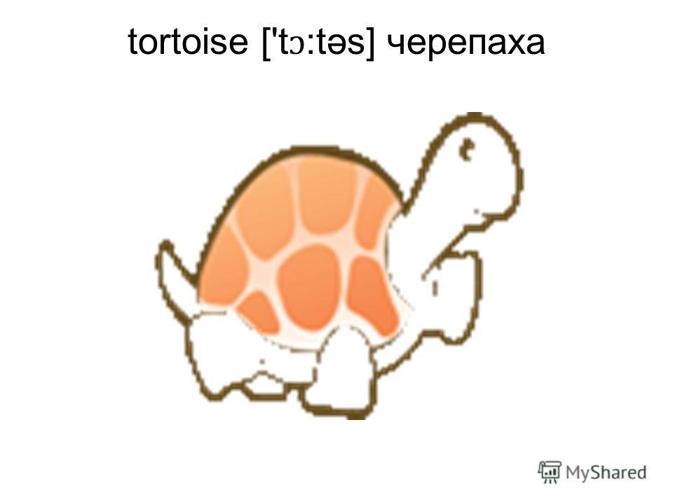 tortoise ['t ɔ :təs] черепаха