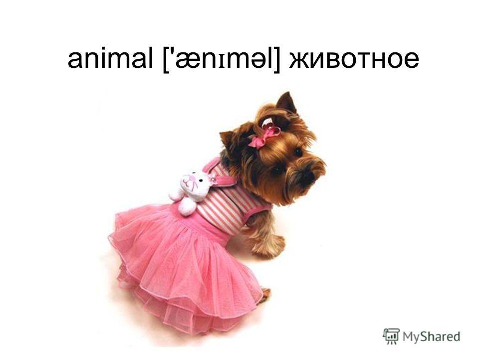 animal ['æn ɪ məl] животное