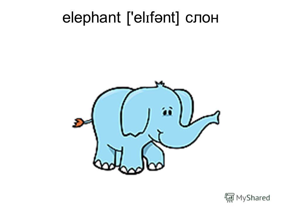 elephant ['el ɪ fənt] слон