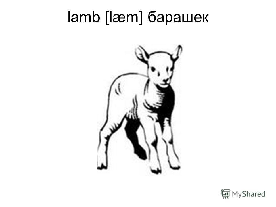 lamb [læm] барашек