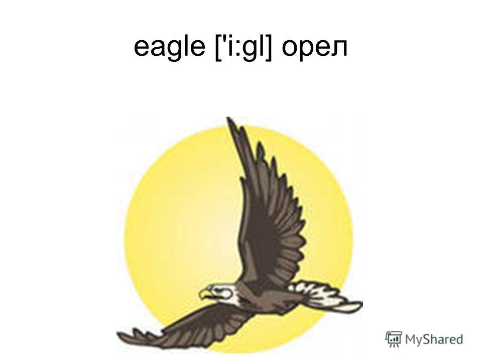 eagle ['i:gl] орел