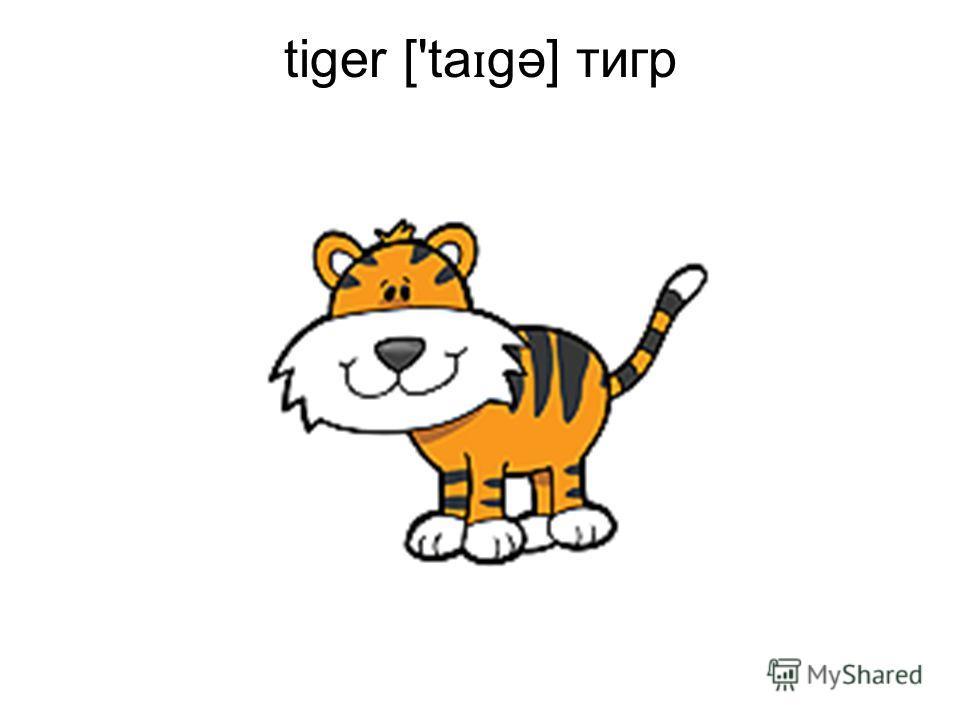 tiger ['ta ɪ gə] тигр