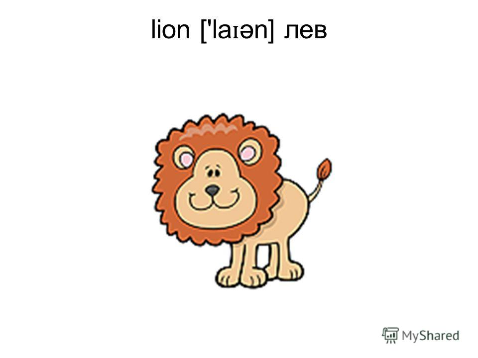lion ['la ɪ ən] лев