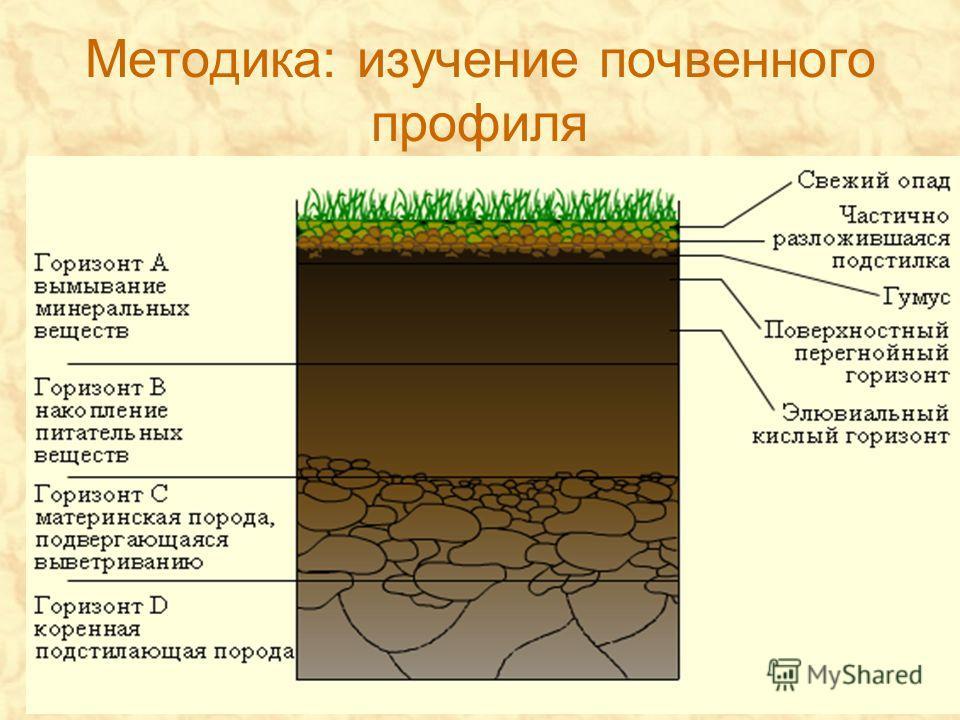 Методика: изучение почвенного профиля