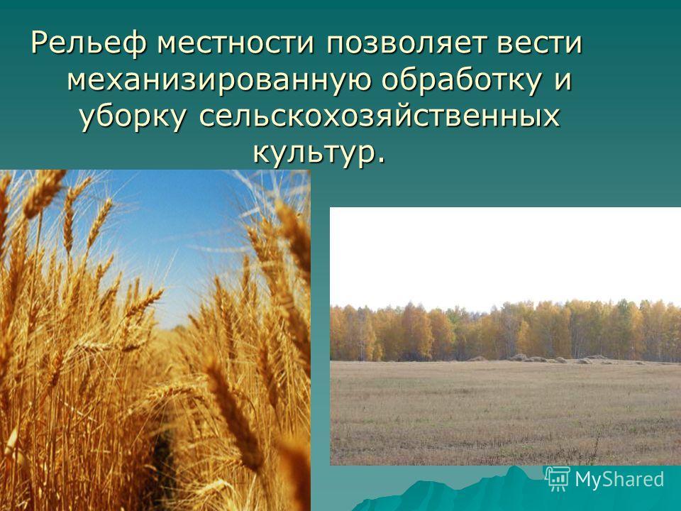 Рельеф местности позволяет вести механизированную обработку и уборку сельскохозяйственных культур.