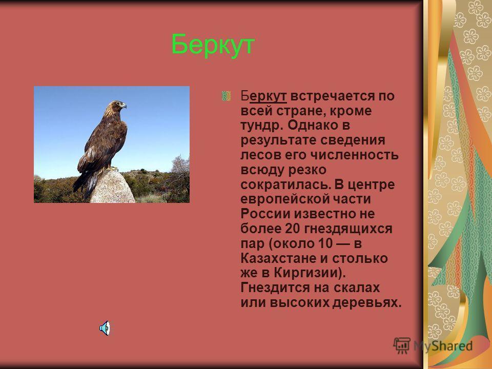 Чёрный аист Черный аист населяет лесную зону от западных до восточных границ России, а также горы Кавказа и Средней Азии. Гнездится в глухих лесных участках близ водоемов и болот, всюду редок и быстро сокращается в результате рубки лесов и осушения в