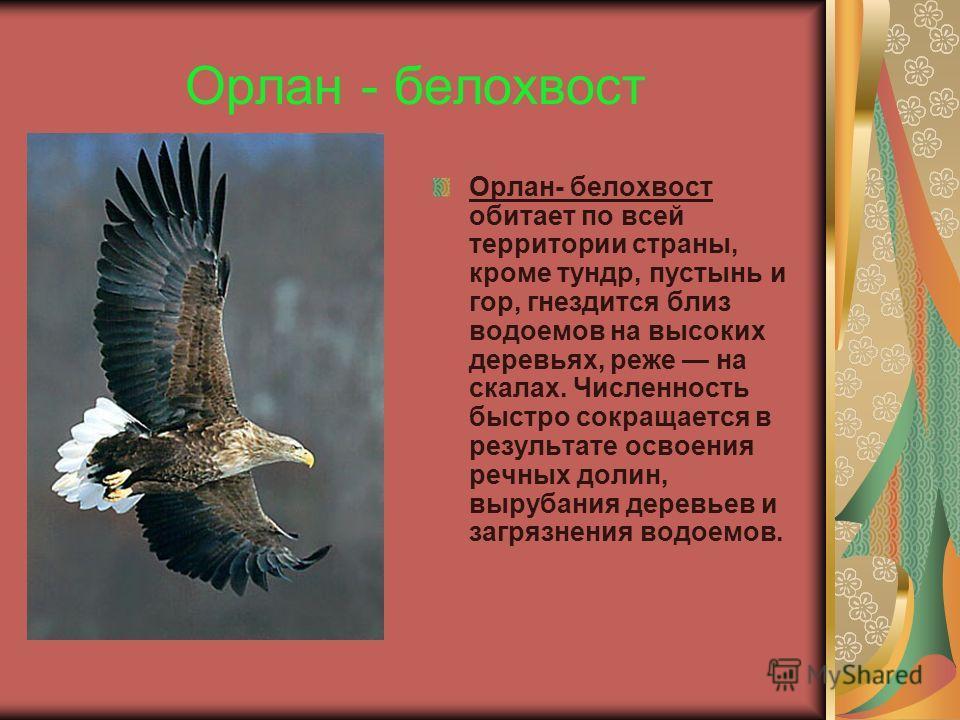 Беркут Беркут встречается по всей стране, кроме тундр. Однако в результате сведения лесов его численность всюду резко сократилась. В центре европейской части России известно не более 20 гнездящихся пар (около 10 в Казахстане и столько же в Киргизии).