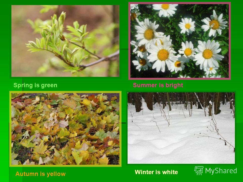 Spring is greenSummer is bright Autumn is yellow Winter is white