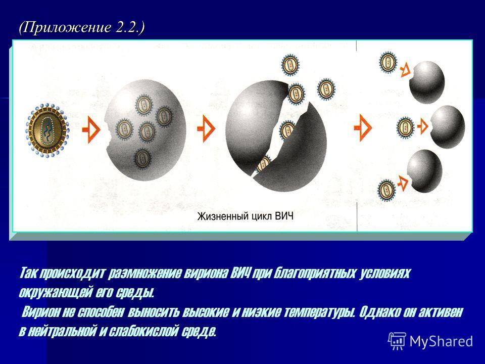 Так происходит размножение вириона ВИЧ при благоприятных условиях окружающей его среды. Вирион не способен выносить высокие и низкие температуры. Однако он активен в нейтральной и слабокислой среде. (Приложение 2.2.)