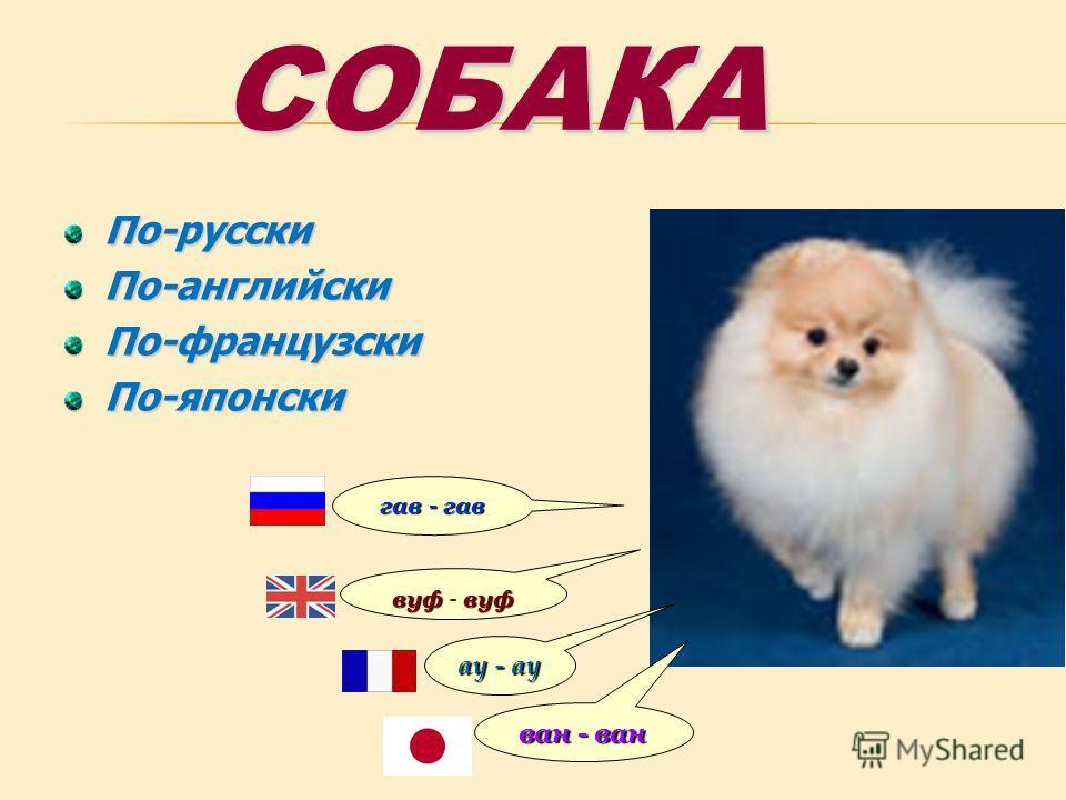 СОБАКА По-русскиПо-английскиПо-французскиПо-японски ван - ван ау - ау вуфвуф вуф - вуф гав - гав