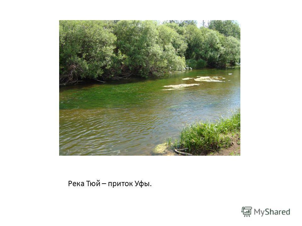 Река Тюй – приток Уфы.