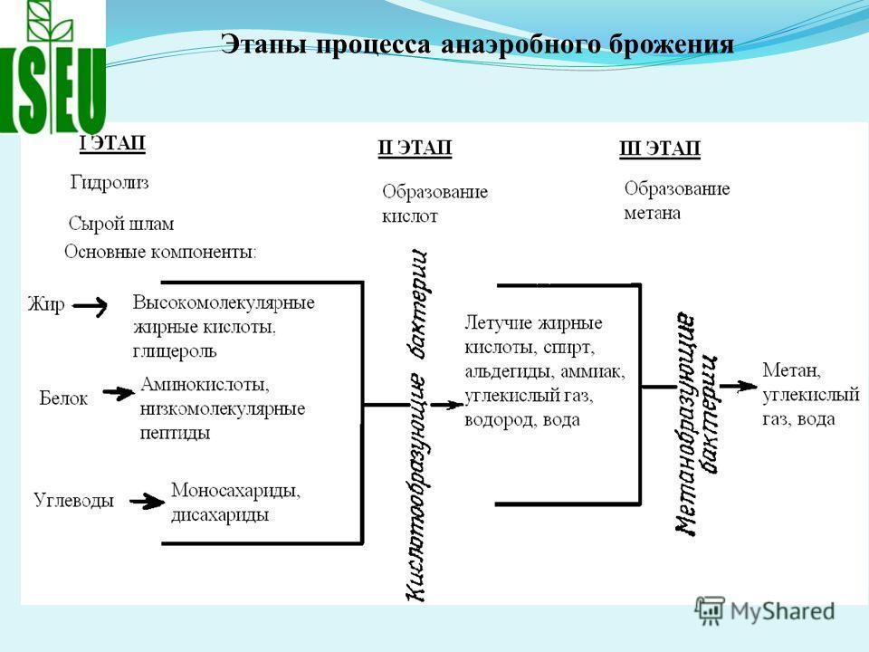 Этапы процесса анаэробного брожения