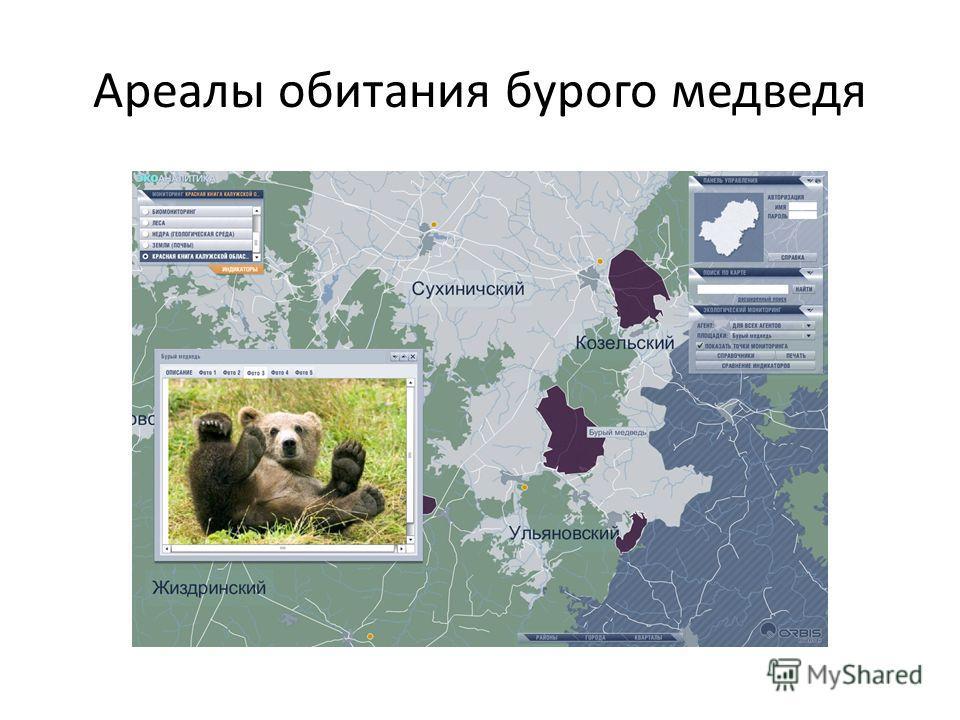Ареалы обитания бурого медведя