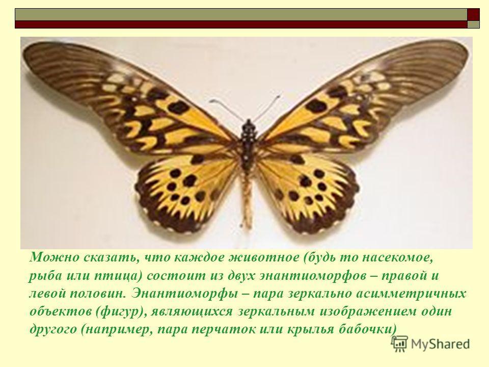 Можно сказать, что каждое животное (будь то насекомое, рыба или птица) состоит из двух энантиоморфов – правой и левой половин. Энантиоморфы – пара зеркально асимметричных объектов (фигур), являющихся зеркальным изображением один другого (например, па