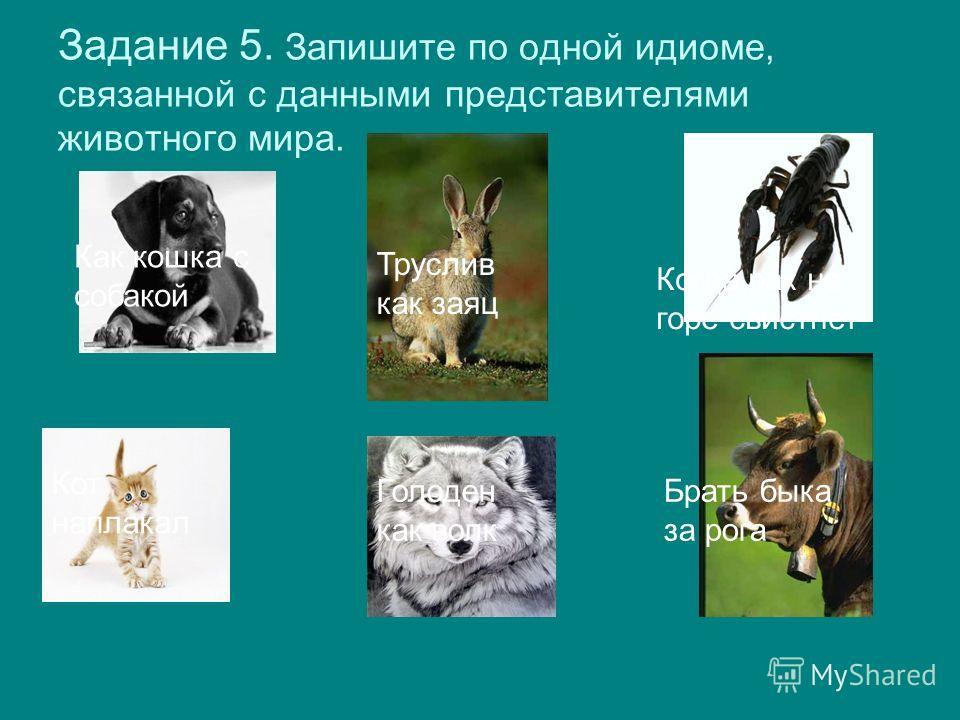 Задание 5. Запишите по одной идиоме, связанной с данными представителями животного мира. Как кошка с собакой Труслив как заяц Когда рак на горе свистнет Кот наплакал Голоден как волк Брать быка за рога