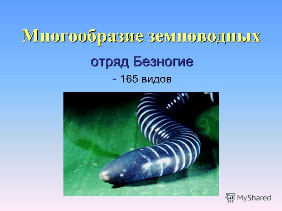 Многообразие земноводных отряд Безногие - 165 видов